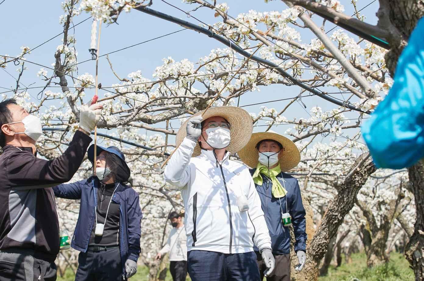 오세현 아산시장, 농촌일손돕기 현장 속으로 관련사진